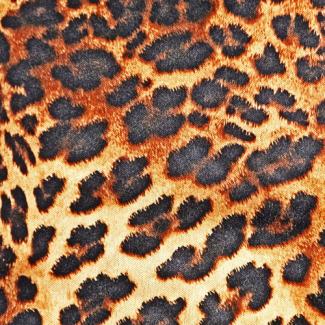 PUL poly Leopard laize 140cm (par 10cm)