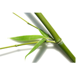 Bamboo for cloth wipes